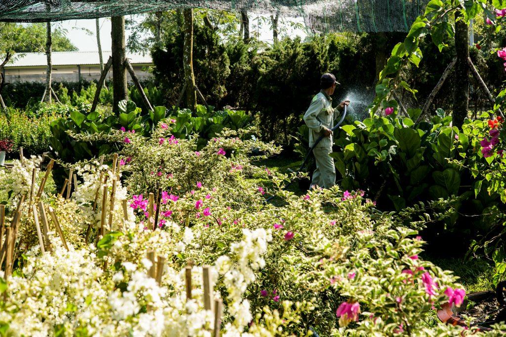 vườn ươm hoa sala garden